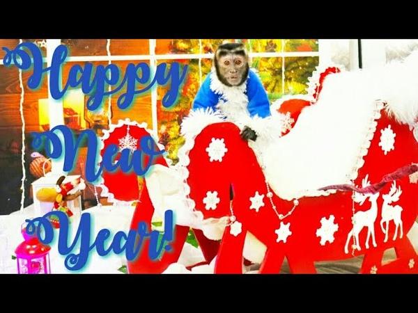 2018 12 31 Обезьяна капуцин Масяня Поздравляем с Новым годом Итоги уходящего года