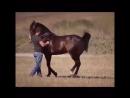 танец с лошадью