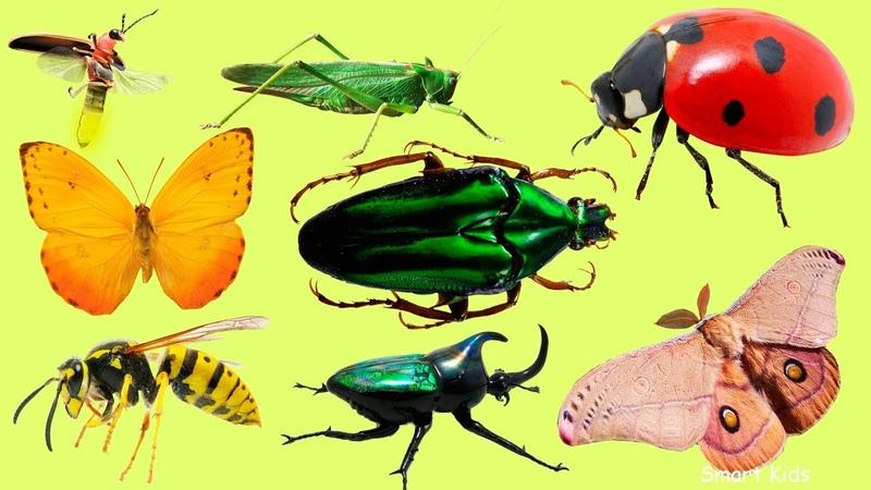 Животные для детей Учим насекомых и их звуки Учим названия и голоса насекомых для малышей