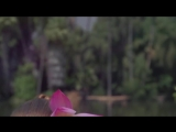 BVLGARI - OMNIA CORAL 720p