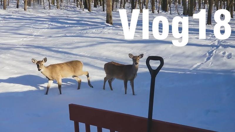Vlog 18 Едем в горы, Олени, Новый Год в марте и ДР друга. ЖИЗНЬ В США