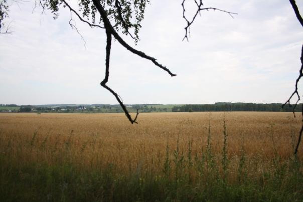 Пошли к реке Осётр, надо через поле, потому что река петляет, впереди как раз долина до которой мы не стали доходить.