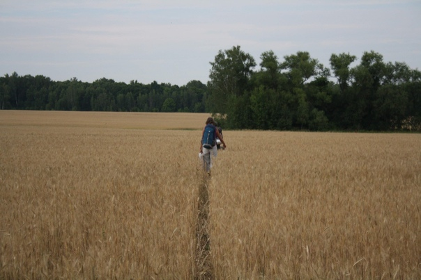 Пошли сквозь поле, протаптывая узкую колею. Её уже кто-то проехал до нас, но всё же это не 22 пары ног.  Мария https://vk.com/id5974921