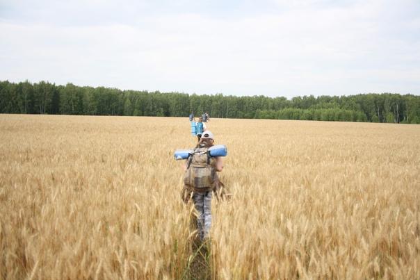 В этом поле погуще колоски и повыше, вон почти по пояс скрывают. И высажены рядком.