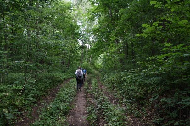 Возвращаемся через лесную просеку.