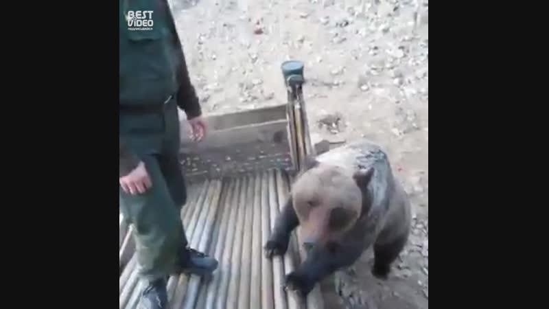 Русских мужиков медведем не испугаешь