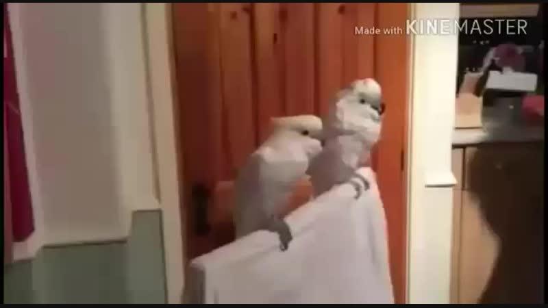 VIDEO-2018-11-08-09-04-23.mp4