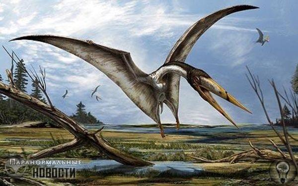 Странная история об огромном птерозавре из Тумстоуна Городок Тумстоун, находящийся на юго-востоке штата Аризона, с 1931 года работает как живой музей под открытым небом, иллюстрируя собой все