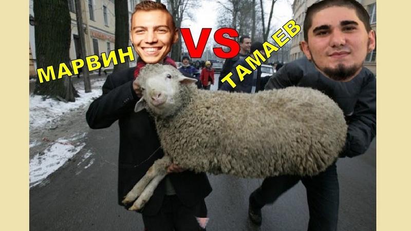 Гей Тамаев и его овца? Асхаб Тамаев VS Филипп Марвин 2 трэш-ток