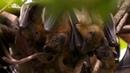 Удивительные летучие мыши. Документальный фильм