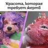 """Народный Возмущенец ☝НАКИПЕЛО on Instagram: """"☝️В Новороссийске красят кошек.  Куда мы катимся?! 🤦♀️🤦♀️🤦♀️ «Новый вид издевательства»: в Новоросс..."""
