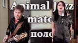 Animal JazzAmatory - Три полоски (кавер)