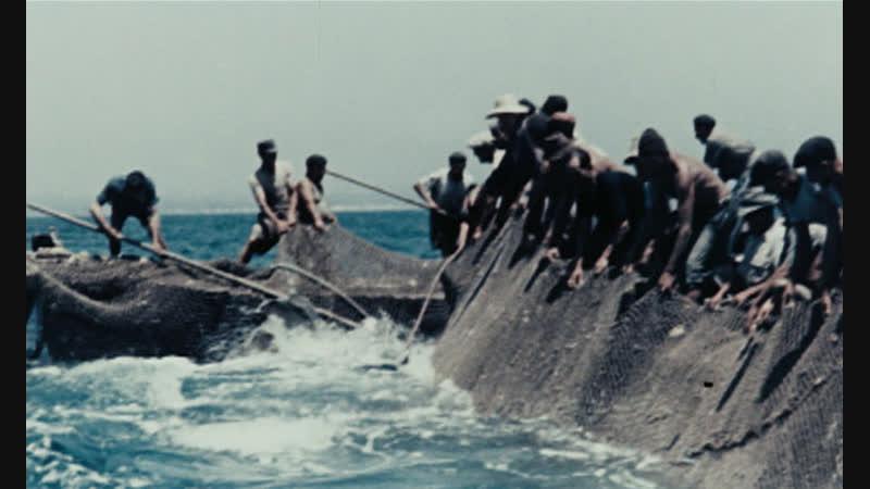 Contadini del mare - Vittorio De Seta (1955).
