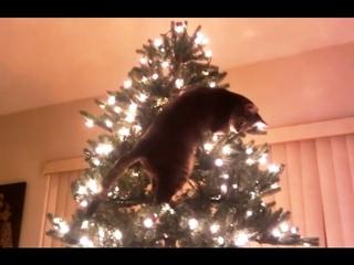 СМЕШНЫЕ КОТЫ И НОВОГОДНИЕ ЕЛКИ!!! Смешные коты и кошки видео приколы!