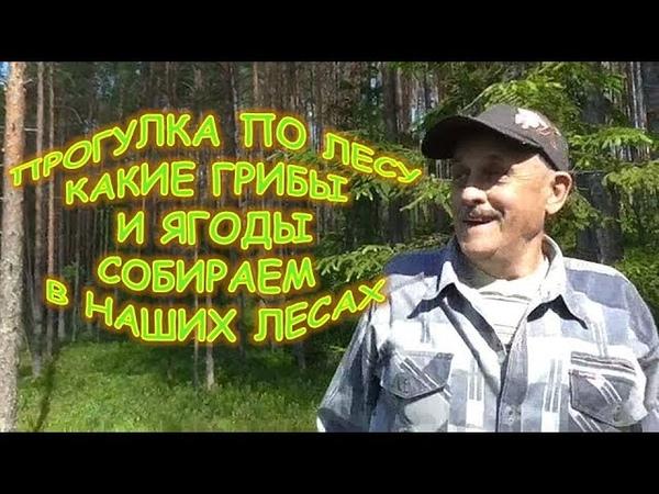 Что даёт нам лес Прогулка по лесу Какие ягоды и грибы собираем в наших лесах