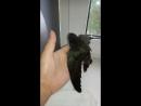 Беззубик разминает крылья
