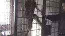 Главарь ОПГ Ащеул ломает клетку видео Банда Курагинских беспредельщиков