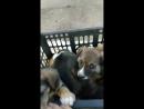 Малыши из коробки