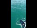 Дельфины. Яхты.