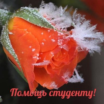 Айгуль Алиева