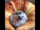 The Daily Heartbeat Hedgehogs Part 2 Facebook