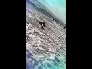 Видео: Гела Гуралиа - Главное кости на месте 😂🙈 #чёрноеморе #შავიზღვა