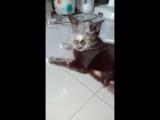Кот, это точно мука была. Видео приколы