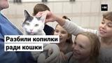 Школьники собрали деньги на операцию кошке, которую сбила машина | ТОК