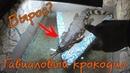 Как вырос гавиаловый крокодил! \ малыш гребнистого крокодила тоже подрос!