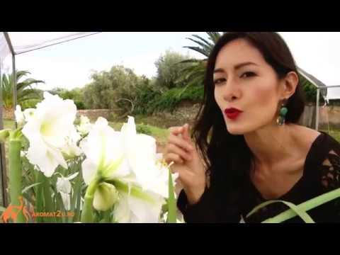 Dolce and Gabbana Floral Drops Дольче и Габбана Флорал Дропс отзывы о духах