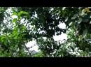 Семья Бровченко Поездка в Иркутск Покупки кружки у друзей на даче часть 1 08 15г