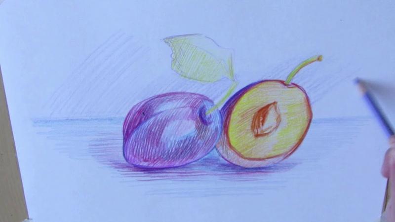 Как нарисовать аппетитные сливы цветными карандашами?