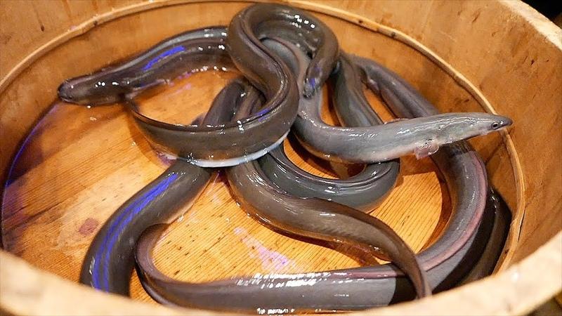 Japanese Food - GRILLED EEL Seafood Barbecue Tokyo Japan