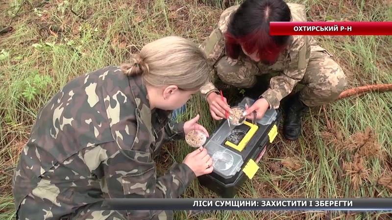 На Сумщині проводять науковий експеримент: біологічний метод боротьби з верхівковим короїдом