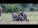 A Heap of Cutest Elephants