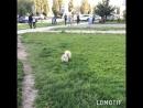 Собаки - мои любимые люди 🖤 Лучшие друзья навсегда 🖤