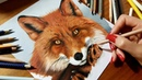 Speed Drawing of a Red Fox Colored Pencil Artwork Jasmina Susak