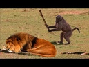 Animals Can Be Jerks Compilation