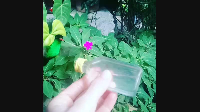 Ямайка. Кормление колибри