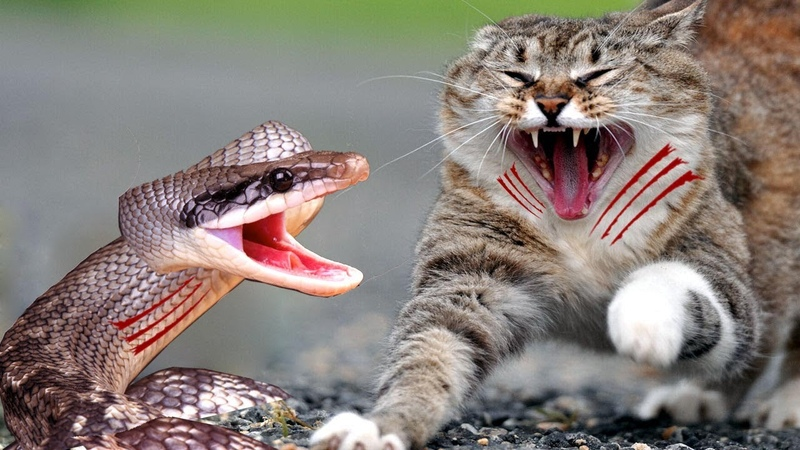Real Anaconda Stalks Cat Home Brave Cat's Mother Protect and Save Her Baby Cat Life From Anaconda