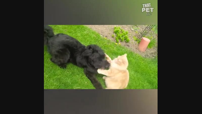 Боевые животные!