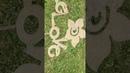 Flower Garden - حديقة ازهار - Цветник