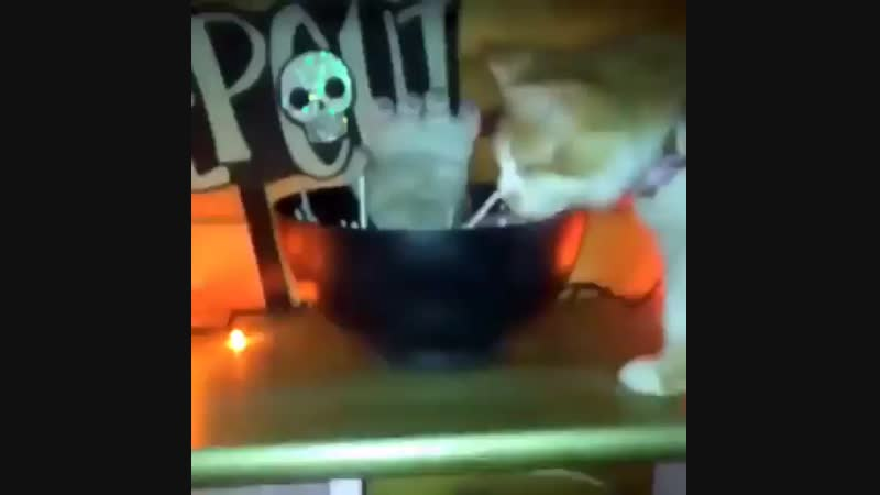 Catto gets spooked