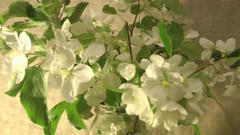 Картина маслом поэтапно Букет яблони. Bouquet of apple-tree. Painting