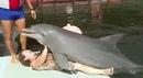 Дельфин и русалка / Dolphin and mermaid