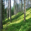 Runlab Trail