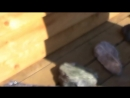 Усть Койва Камень здоровья