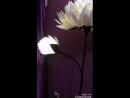 Video_20181015172435812_by_videoshow