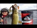 Обзор Пеллетс Monster Fish инновационной приманки для рыбалки