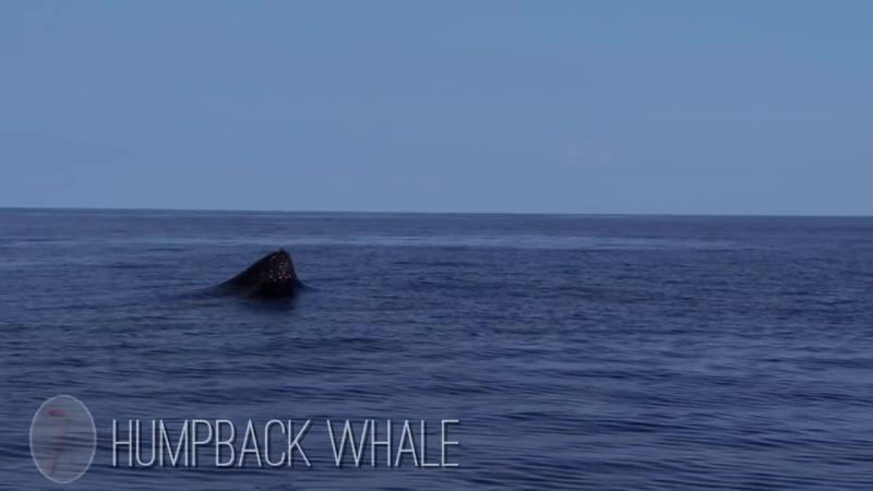 Жизнь океана в замедленной съемке от BBC Earth